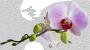 отдушка Орхидея (Франжипани)