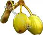 масло Ши (карите) белое рафинированное