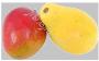 отдушка Манго и папайя