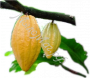 масло Какао нерафинированное пищевое