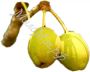 масло Ши (карите) нерафинированное