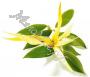 гидролат Иланг-иланга (стандартизированная цветочная вода)