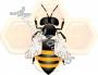 Воск пчелиный белый