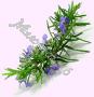 гидролат Розмарина (стандартизированная цветочная вода)
